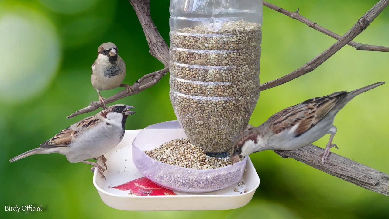 Water Bottle Bird Feeder Homemade Easy Bird Feeder Craft