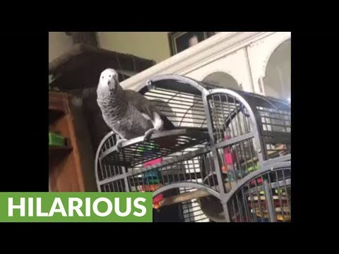 """Parrot hears dog barking, calls him a """"good boy"""""""