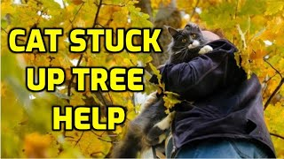 How To Rescue A Cat From A Tall Tree