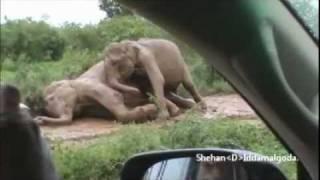 Elephants in Sri Lanka by Shehan.D.Iddamalgoda.