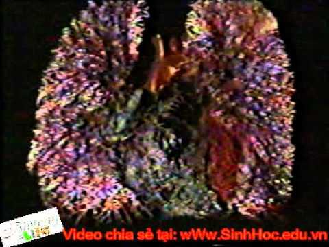 He tuan hoan_SinhHoc.edu.vn.avi