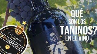 Qué son los TANINOS en el vino? PuntoBarricaCL
