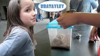 Petting Cockroaches (WK 173.3) | Bratayley thumbnail