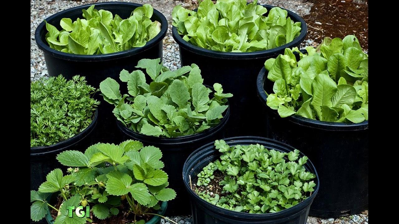 75 Vegetable Container Garden Ideas - YouTube