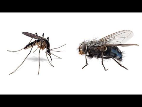ПОЧЕМУ об ЭТОМ МОЛЧАТ? Как избавиться от комаров и мух