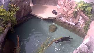 LIVE: Seattle Aquarium sea otter cam 1