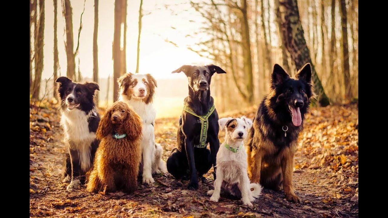 Беспородные собаки & Породистые собаки