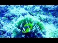 Scuba Diving in the Red Sea, Egypt, Sharm El Sheikh