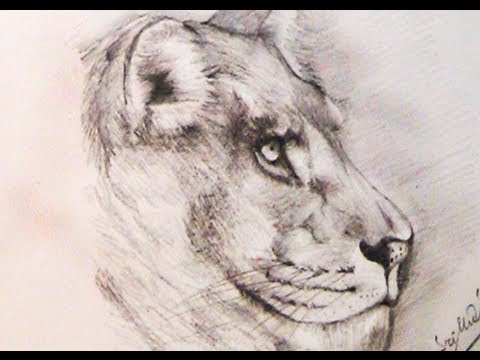 Simple lion drawings in pencil
