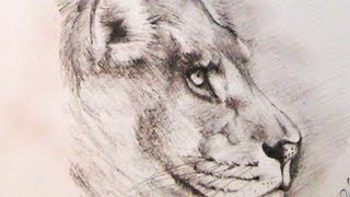 How to Draw a Lion using Pencil