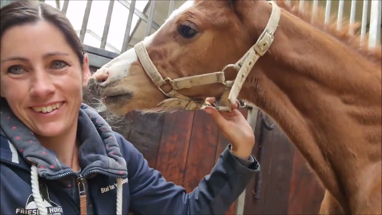 Temperature, and our pup plays with Senna | Friesian Horses