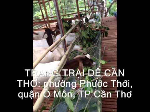 Ky thuat nuoi de- Trang Trai de Cần Thơ - Toàn 0932.39.49.49