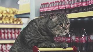 Ржачные коты, реклама с участием кошек, как ведет твоя кошка, когда мяукают.