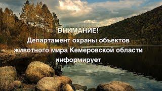 Департамент охраны объектов животного мира Кемеровской области информирует