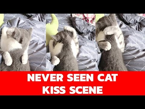 Never seen CAT Hugs and Love Romance| Viral Video| Cats funny compilation video| Pet animals