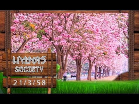 """เกษตร Society 21/3/58 : ความงาม """"ชมพูพันธุ์ทิพย์"""" บานสะพรั่ง"""