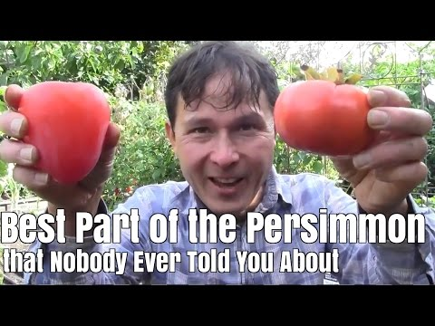 Best Part of the Persimmon Fruit that Nobody Ever Told You About