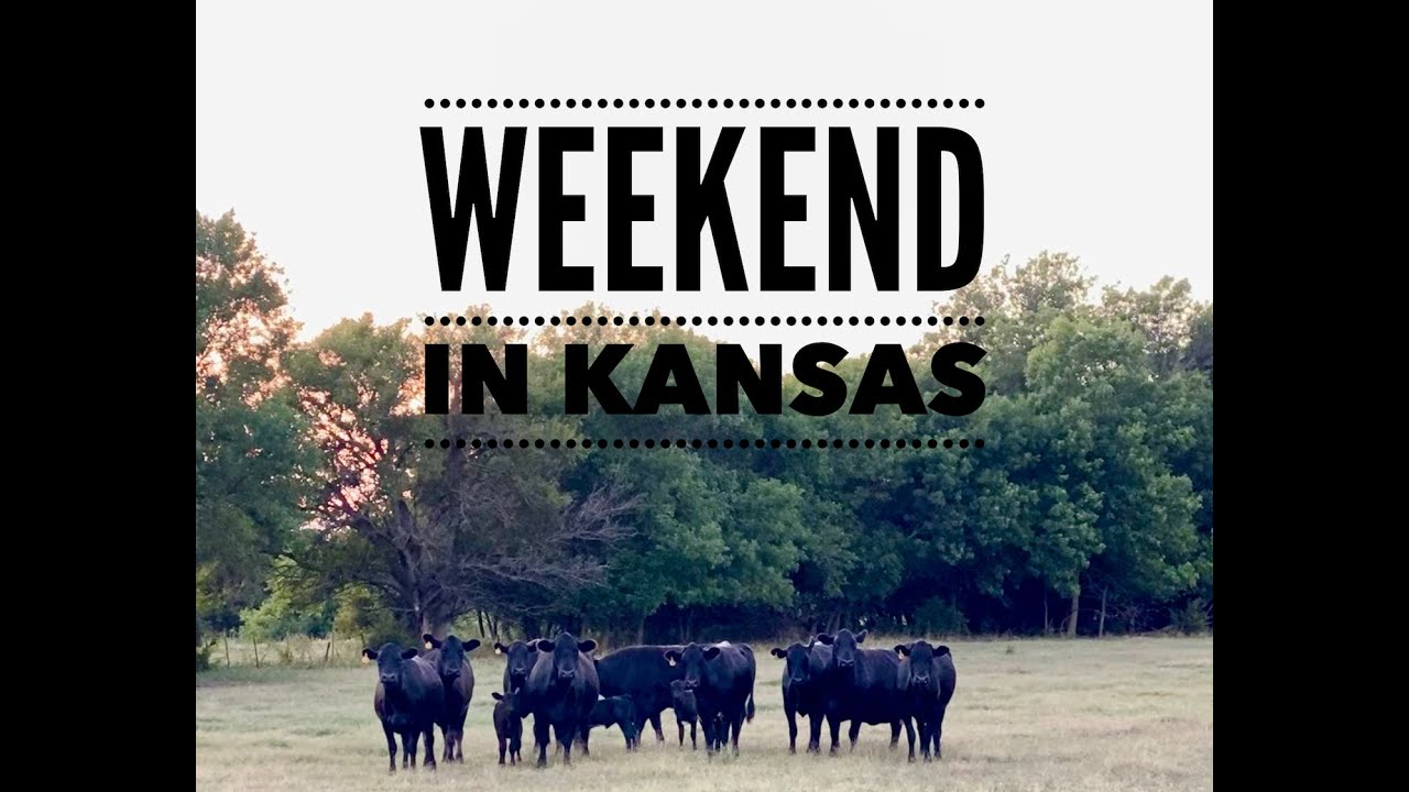 Our Weekend in Kansas - Jet Skiing, Doctoring Cattle, Corn Fields, and Cows - Vlog 002