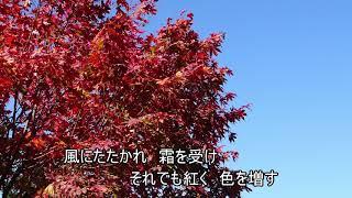 説明 歌手 中村仁美(戸川よし乃)さん.
