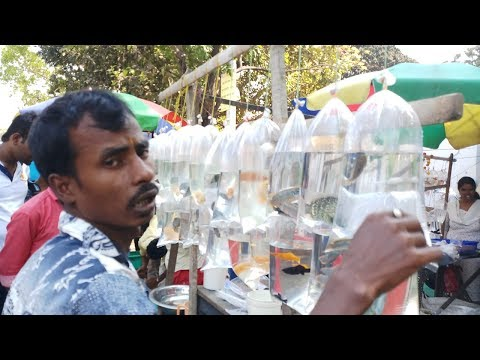 Aquarium Fish Market In Kolkata | Best Place To Buy Pet Fish | Shyambazar(West Bengal)Kolkata India