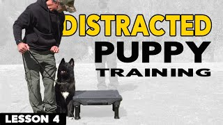 How to Train a Distŗacted Puppy