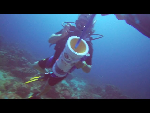 SPEARING LIONFISH IN STUNNING ARUBA WATERS