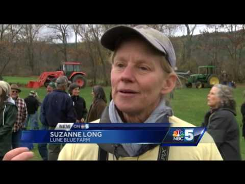 Organic farmers rally against hydroponic practices