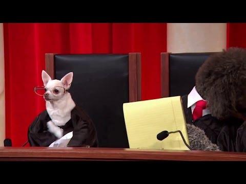 Petrella v. MGM, Inc.: Oral Argument - January 21, 2014