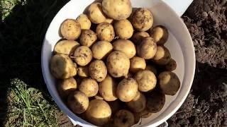 Gambar cover Как легко увеличить урожай овощей и фруктов? Домашний компост поможет!