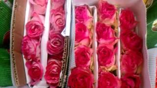 NEW YORK ROSES wholesale- ecuador farms, rose farm ,buy in bulk