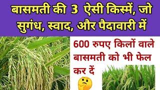 Download बासमती धान की 3 बेस्ट किस्में जो पैदावारी सुगंध और स्वाद मे में नामी है।। basmati rice