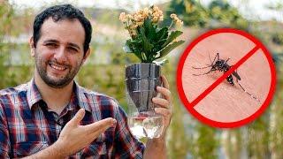 Vaso de plantas antidengue (e ANTIZIKA e ANTICHIKUNGUNYA)
