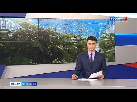 Вести-Волгоград. Выпуск 22.01.20 (14:25)