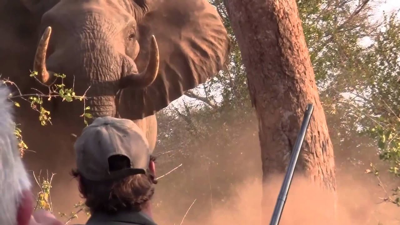 Shooting An Elephant essay Ideas