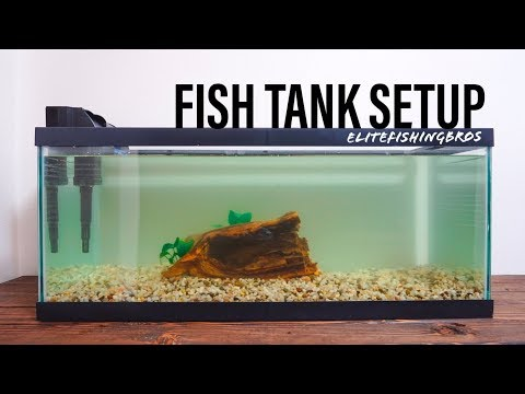 How To Set Up A Fish Tank - 20 Gallon Long