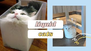 Cute Liquid Cats: Defy All Known Properties Of Solids