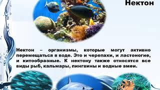 Презентация  Жизнь в океане