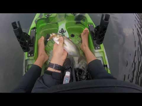 Merimbula Fishing October 2018