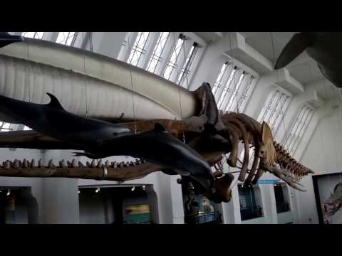 NATURAL HISTORY MUSEUM - UNITED KINGDOM - TOURIST DESTINATION