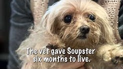 Soupster the Pup Gets a Second Chance at Life
