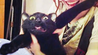 Best Funny Pets Videos -  Cute Cats 😹 And Dogs 🐶 - Try Not To Laugh!