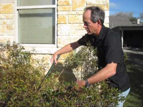 Early Spring Pruning