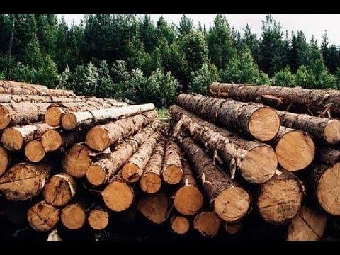Картинки по запросу вырубка лес