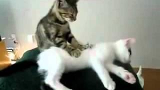Эротический массаж(, 2011-11-24T10:46:18.000Z)