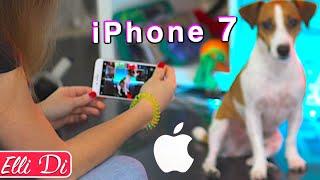 КАК Я СНИМАЮ СОБАКУ на камеру iPhone 7 - ФОТО И ВИДЕО | Elli Di Собаки