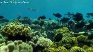 Подводный мир Музыка ДиДюЛя Океан DownloadDownload