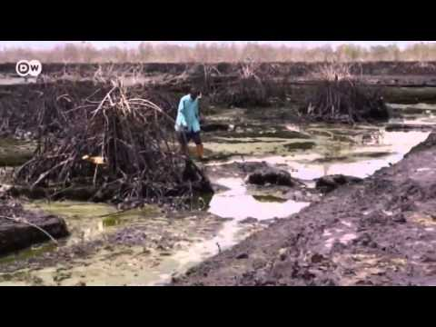 Nigeria  Oil pollution in the Niger Delta   Global 3000