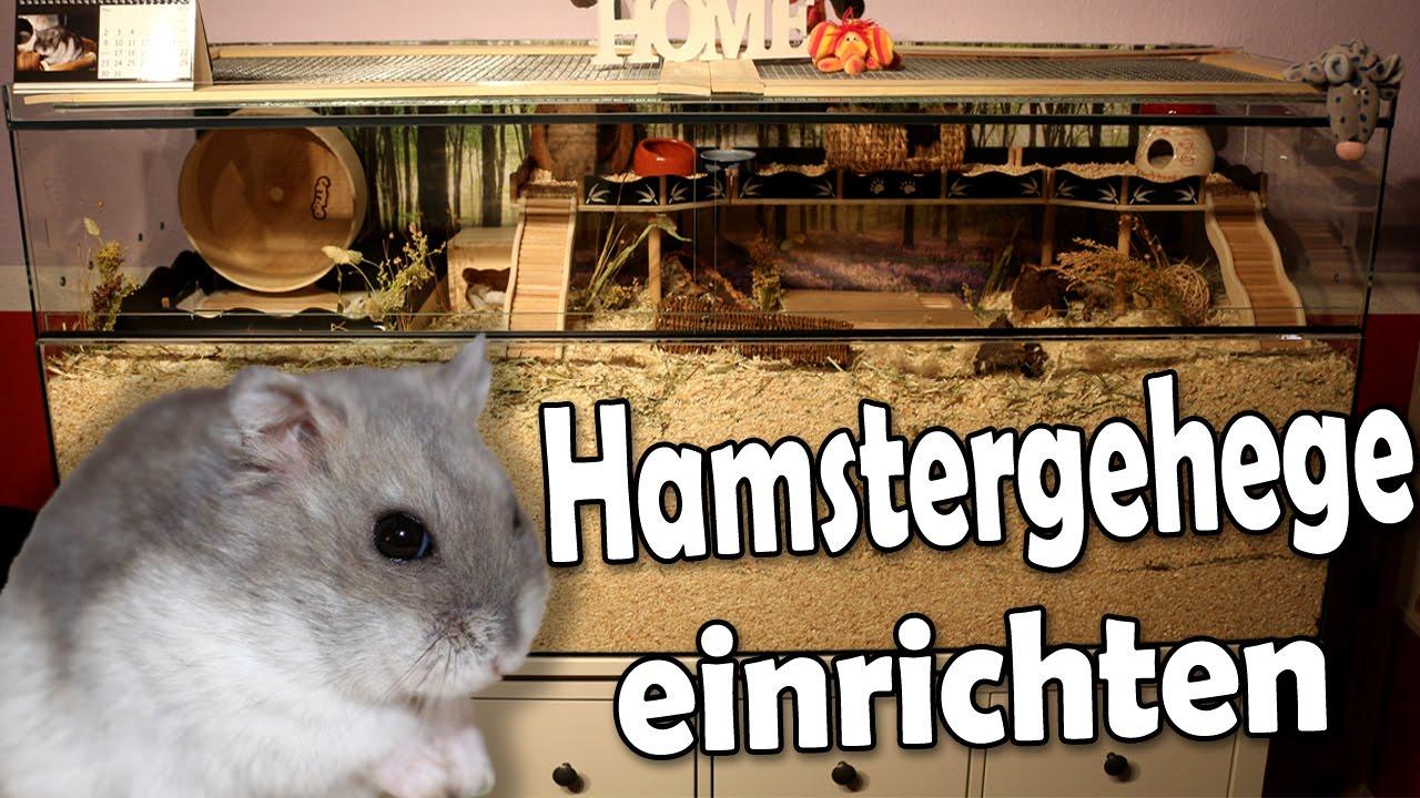 hamstergehege nagerterrarium einrichten zeitraffer mai