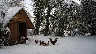 Pallet Wood Hen House Chicken Coop For Less $. Poulailler En Palettes. Gallinero - Paletas De Madera