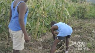 Farming in LaGonave, Haiti